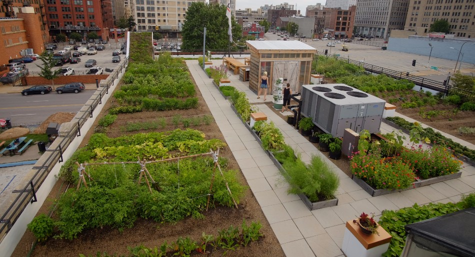 Hanging Gardens | Rooftops | Projects | Food Roof Farm on plants for green roof, plants for rain gardens, plants for container gardens, plants for planters,